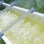 Wastewater treatment with marine microalgae